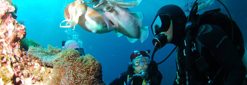 An image for the category Diving in Sardinia